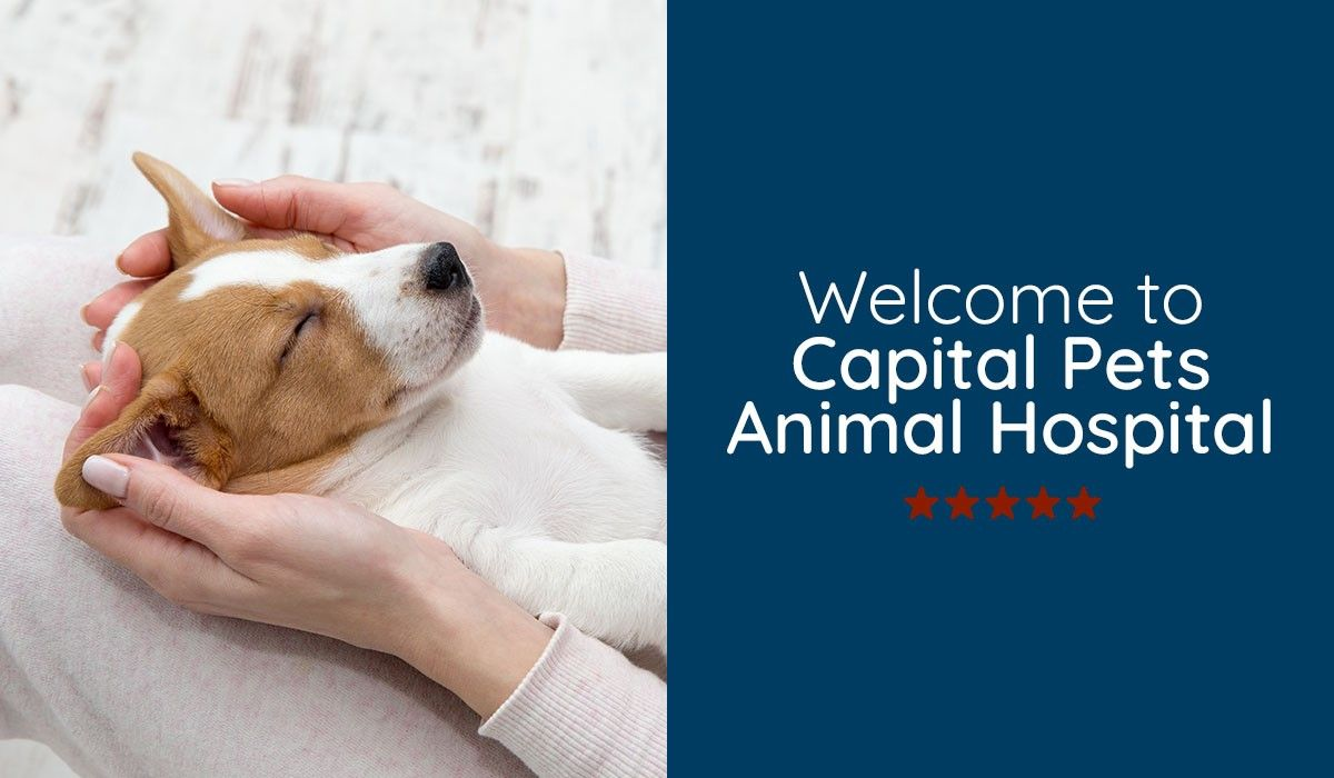 Welcome to Capital Pets Animal Hospital