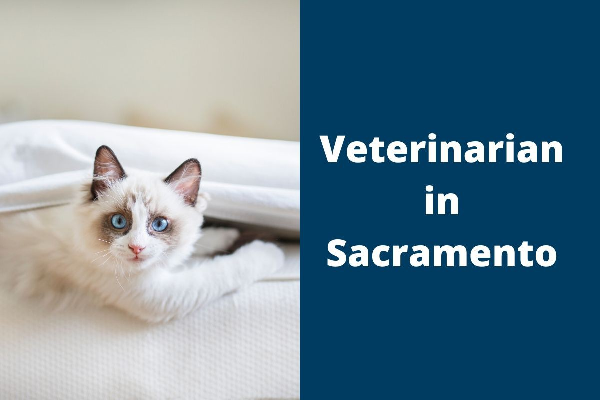 Veterinarian in Sacramento