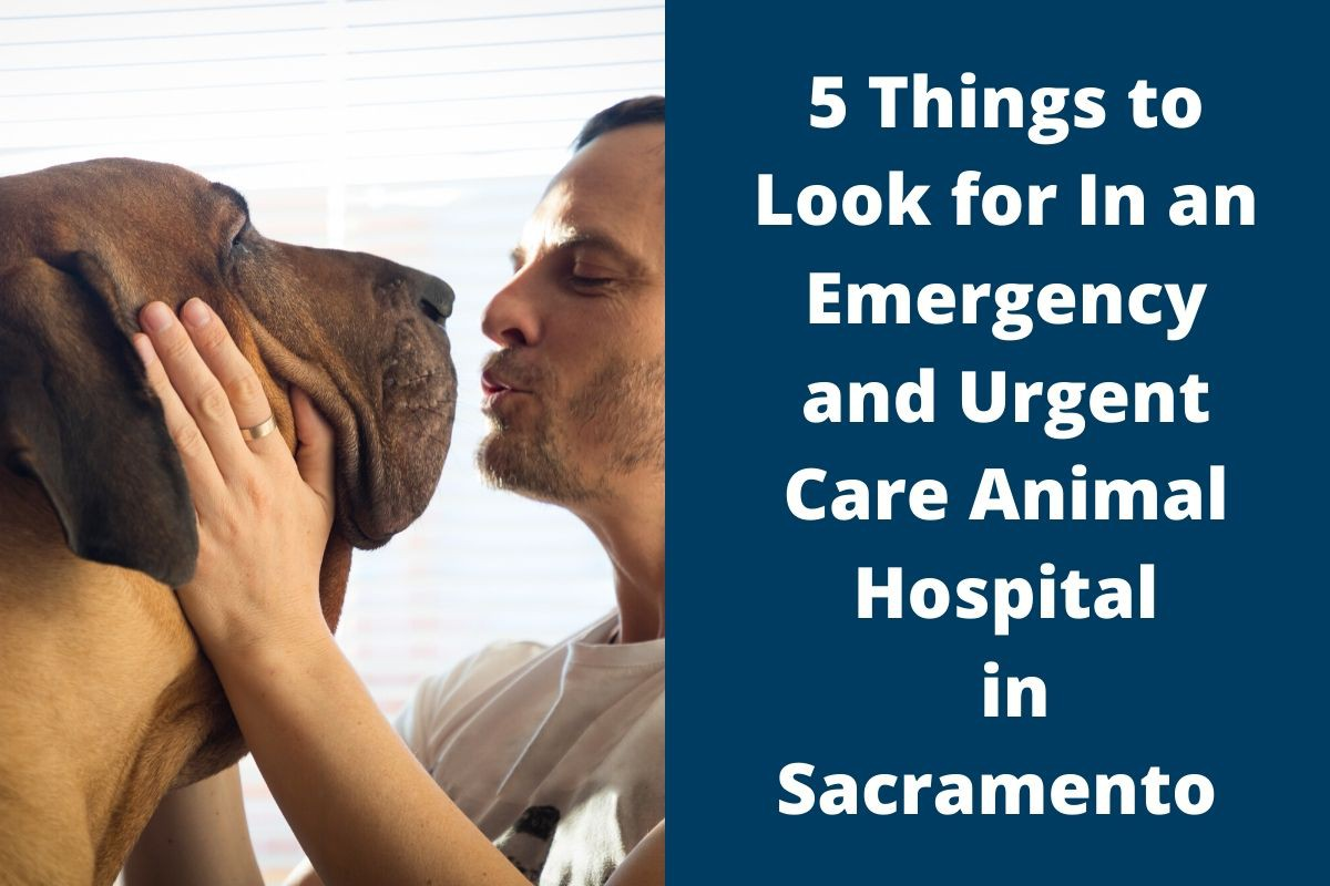 5 Things to Look for In an Emergency and Urgent Care Animal Hospital in Sacramento