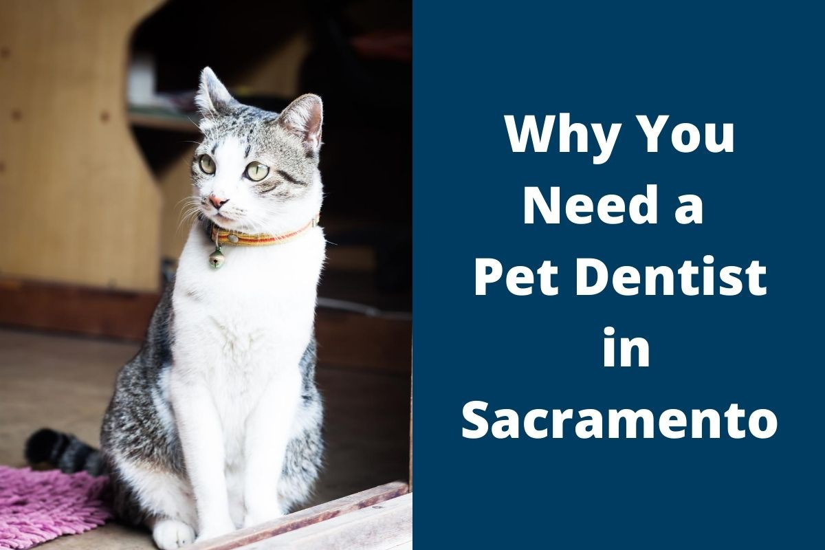 Why You Need a Pet Dentist in Sacramento