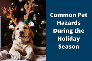 Common-Pet-Hazards-During-the-Holiday-Season